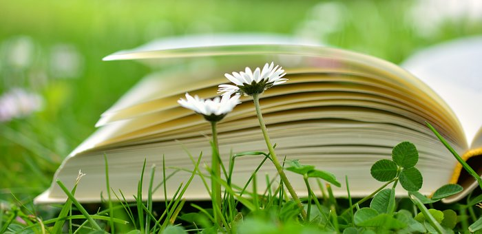 book-2304389__340